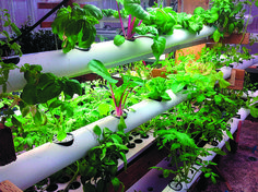 Hydroponics: Speed Vegetables To Your Table... Plants take up water and nutrients that flow through a PVC pipe in the hydroponic nutrient film technique (NFT). ... #Aquaponics #Hydroponics #Gardening #Design