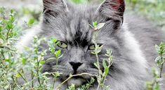 Ein Foto mit einer Katze mitten im Grün