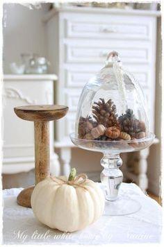 Pumpkins and pine cones