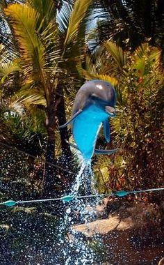 *** Delfin im Sprung *** Image, Dolphins, Reflex Camera, Animales