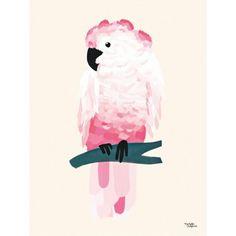 Poster - Perroquet - Rose
