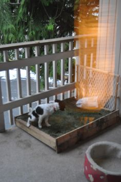 The Adventures of Kym & Dustin: D.I.Y- Patio Dog Grass