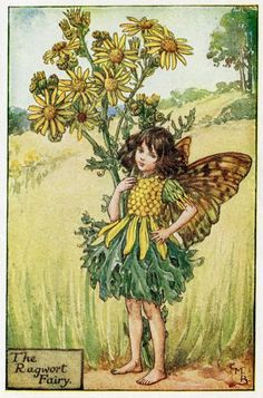 Jacobée fée fleur Vintage d'impression, c.1927 Cicely Mary Barker livre plaque Illustration