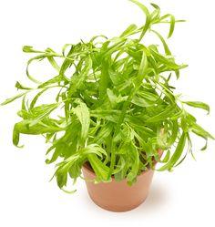 Rakuuna | Oksasen Puutarha Shrubs, Perennials, Trees, Garden, Flowers, Plants, Garten, Tree Structure, Lawn And Garden
