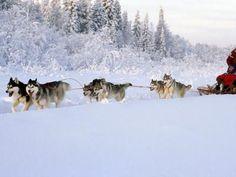 Gyönyörű téli kép
