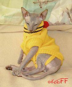 Модные петли: вяжем одежду для кота / Статьи / Коты на Prostozoo.com.ua