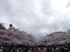 """""""Ueno-koen""""(Parque), Ueno Tokyo Japan"""