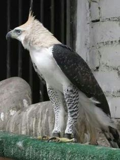 Amazing Bird of Prey
