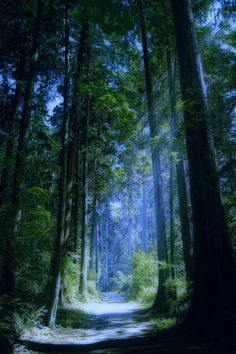 agoodthinghappened:  Enchanted Forest by frog22209 on Flickr.