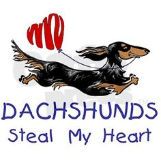 Dachshunds steal my heart