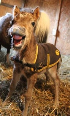 """Smile and Say, """"Carrots!"""". Laughing baby foal."""