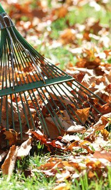 13 Autumn Gardening Tips - Autumn is the time to visualize your spring garden and plant accordingly. Here are our outdoor