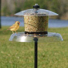 Squirrel proof bird feeder for diy inspiration.