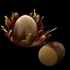 Un œuf noisettes et involucre chocolat noir en chocolat noir (66%), garnis d'un mélange gourmand de fritures au chocolat au lait (40%) et chocolat noir (66%) ainsi que d'œufs garnis de praliné.