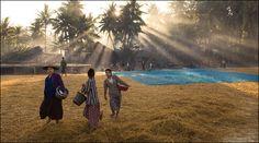 Myanmar Agriculture Field ... #myanmar