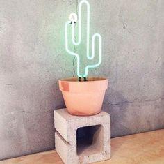 Cactus cool