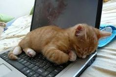 Sleep on laptop *sigh