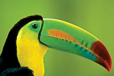 Photography in Costa Rica - Toucan