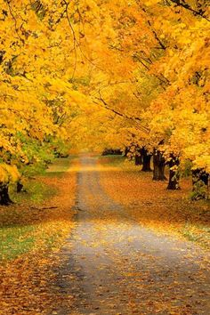 Autumn.... My favourite season
