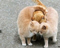 "The extremely rare, perfectly executed ""triple hug."" aww"