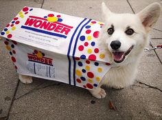 Wonder Bread costume!