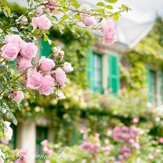 Pink roses and green shutters, Monet's house, Giverny  (Photo: Georgianna Lane)