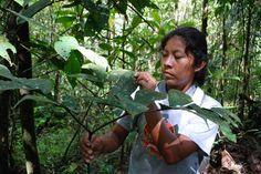 Jovem índia aprende a identificar plantas medicinais da floresta