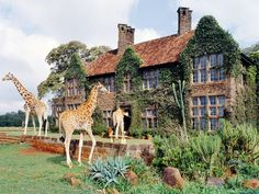GIRAFFE MANOR Nairobi, Kenya This intimate hotel outside of Nairobi lets you get up close and personal with Rothschild giraffes. The original manor was built in 1932 and has served as a giraffe sanctuary since the Today, Giraffe Manor has six bedr Oh The Places You'll Go, Places To Visit, Safari, Kenya Travel, Top Hotels, Unique Hotels, Fauna, Travel Inspiration, Istanbul