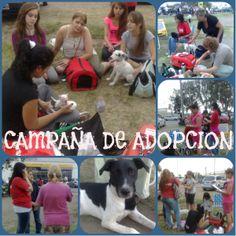 Campaña de adopcion - 18/11/2012