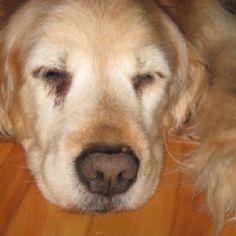 My sweet Bailey...I miss u!
