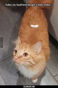 A Label Maker Put To Good Use #lol #haha #funny