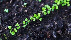 Wie du einen Anbauplan für deinen Gemüsegarten erstellst