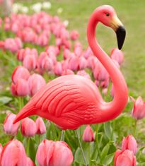 Don Featherstone Pink Flamingos!