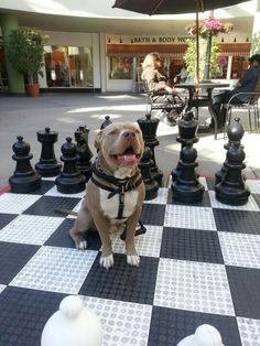 King me :)