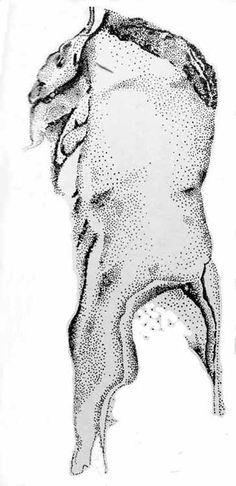 Dibujo del bisonte sobre la estalactita, adaptado de S. Giedion.