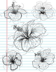 Google Image Result for http://i.istockimg.com/file_thumbview_approve/12497581/2/stock-illustration-12497581-hibiscus-sketches.jpg