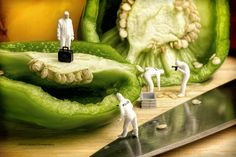 CSI investigating a green Pepper | Flickr - Photo Sharing!