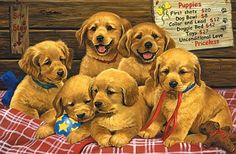 Avton Large Premium Full Drill DIY Diamond Painting Kits for Adults and Kids - Adorable Golden Retriever Design - Relax and Paint with Diamonds - Art Tool Kit Includes All Accessories Golden Retriever, Retriever Puppy, Brown Puppies, Dogs And Puppies, 3 Gif, Foto Gif, Collor, Dog Crafts, Smiling Dogs