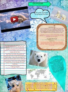 Póster de l'ós polar. Animal a la llista de l'UICIN Projecte: Per què despareixen animals del planeta?