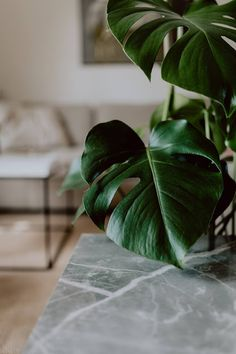 Plant Table, A Table, Ornamental Plants, Sunset Photos, Potted Plants, Plant Leaves, Free Images, Cool Photos, Tropical