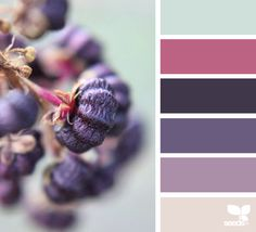 - design seeds color palettes posted daily for all who l Colour Pallette, Color Palate, Colour Schemes, Color Patterns, Color Combos, Color Harmony, Design Seeds, Color Swatches, Color Stories