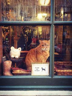 Philthy Midtown Village window cat