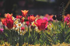 Spring parterre - Focus on a parterre spring at a Renaissance castle. Haute-Marne, France.