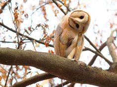 Owl Antics Photo by Dushyant Gaur -- National Geographic Your Shot