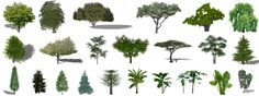 This page is a list of existing Sketchup trees and what trees they could be used…