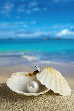 Sea shells in pearl background Cute Wallpapers, Wallpaper Backgrounds, Pearl Background, Beach Wallpaper, Art Mural, Ocean Waves, Ocean Beach, Strand, Sea Shells