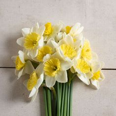 White, overlapping petals surround a shallow, ruffled cup of pale yellow to creamy white. Plants produce one flower per stem. Narcissus Bulbs, Daffodil Bulbs, Narcissus Flower, Daffodils, Tulips, Spring Flowering Bulbs, Spring Blooms, All Flowers, Types Of Flowers