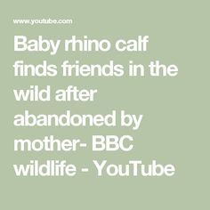 Baby rhino calf finds friends in the wild after abandoned by mother- BBC wildlife - YouTube