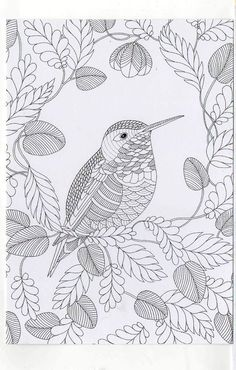 <b>Millie Marotta& Animal Kingdom - A Colouring Book Adventure Paperback . Bird Coloring Pages, Coloring Book Art, Mandala Coloring Pages, Adult Coloring Pages, Tattoo Painting, Colorful Pictures, Animal Kingdom, Drawings, Prints