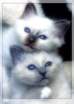 blue eyed cuties